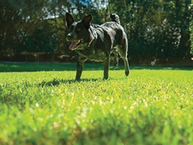 Daleys Turf - Lawn Control