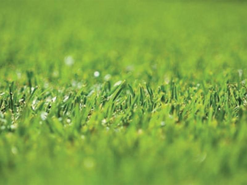 Daleys Turf - Lawn Repair