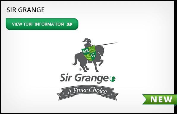Sir Grange - Zoysia Grass