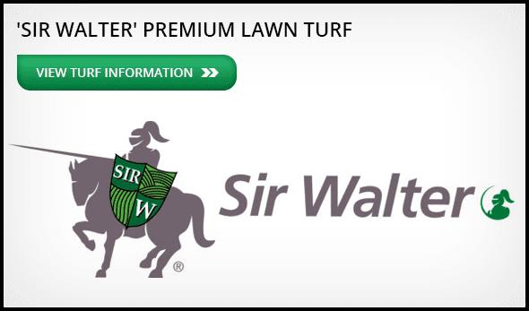 Sir Walter Premium Lawn Turf