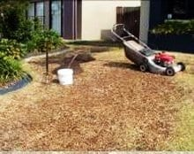 Lawn Renovation - Daleys Turf