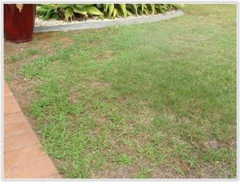Lawn Weeds - Daleys Turf