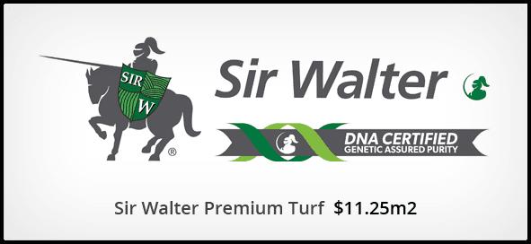 Sir Walter Premium turf