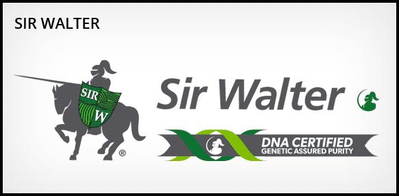 Sir Walter Turf - Daleys Turf
