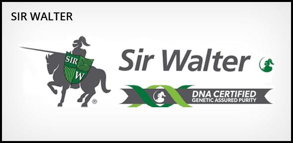 Sir Walter