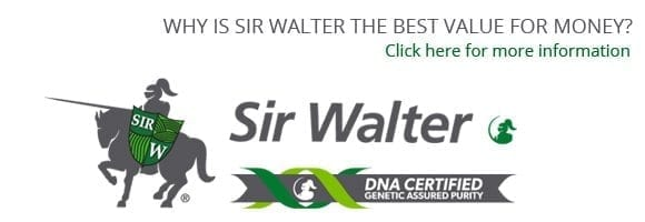 Sir Walter DNA Certified Pricing and Delivery