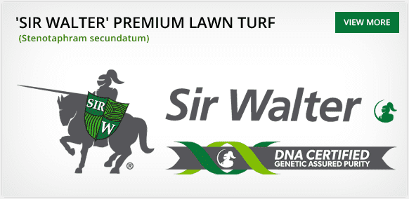 Turf Varieties - Sir Walter