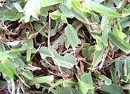 Lawn Grubs - Daleys Turf