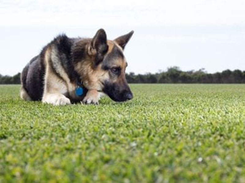 Daleys Turf - Fixing Up Bald Spots Left by Dogs
