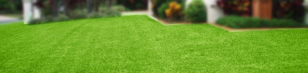Sir Walter DNA Certified Buffalo grass