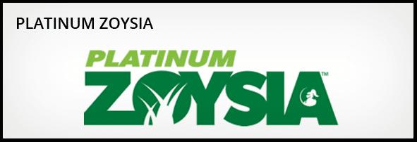 platinum Zoysia turf