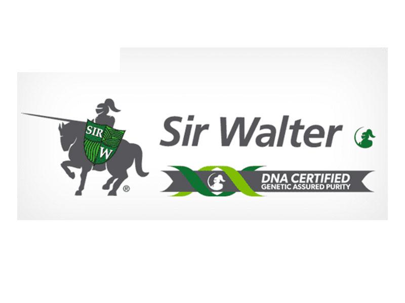 Sir Walter - Daleys Turf
