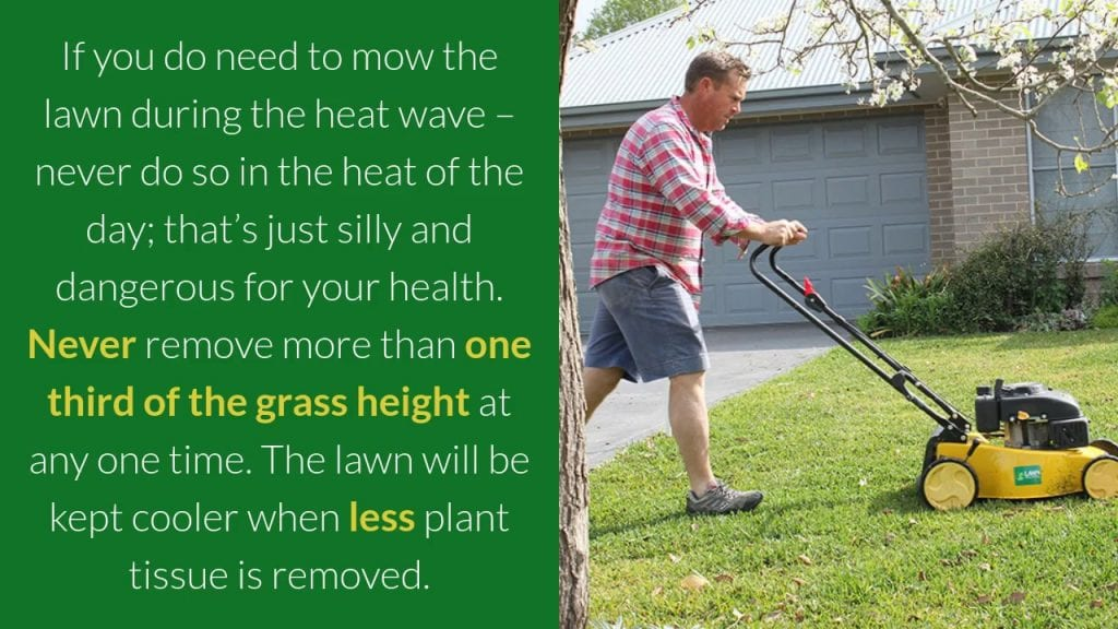 Your Lawn and a Heat Wave - Don't Stress