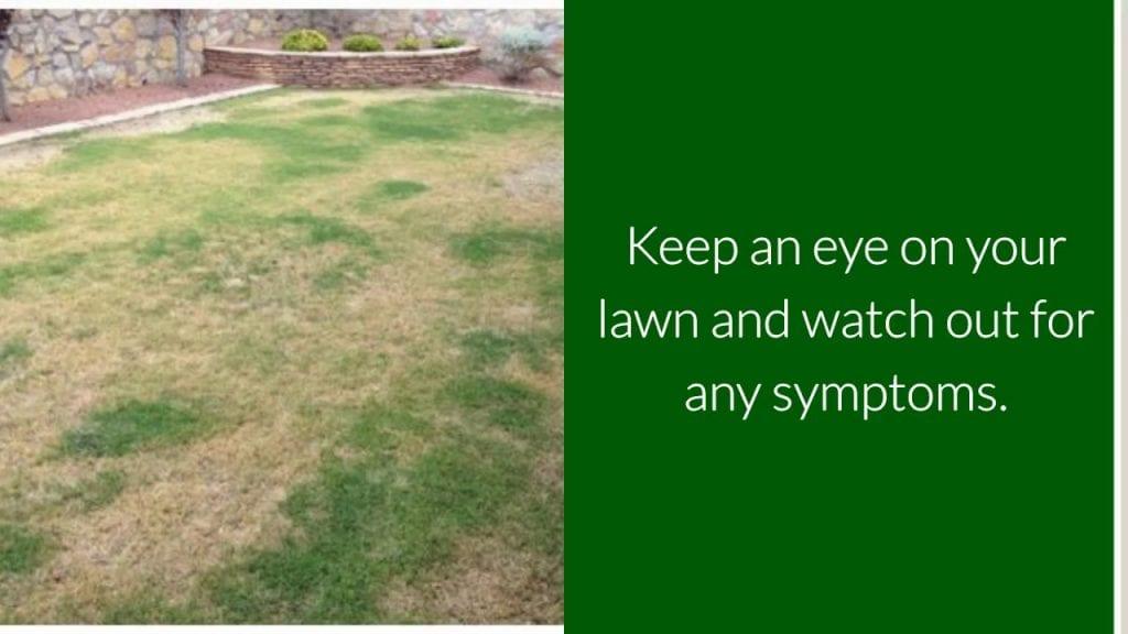 Your Lawns After Floods - Part 2