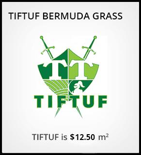 Why Choose TIFTUF™ Bermuda Grass?