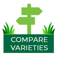 Compare Turf Varities