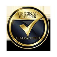 Original Breeder