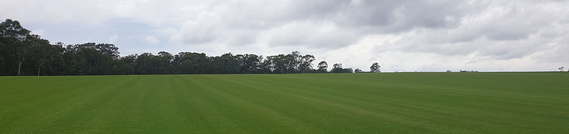 Daleys Turf - Fresh Turf - Sunshine Coast