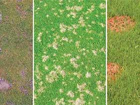 Identifyng Lawn Disease